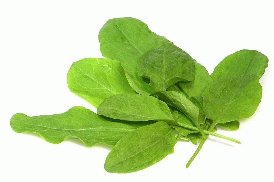Sorrel-leaves1
