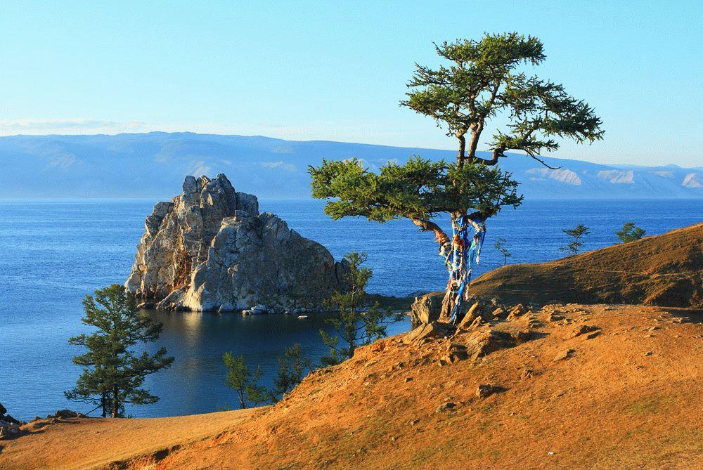 Baikal tree