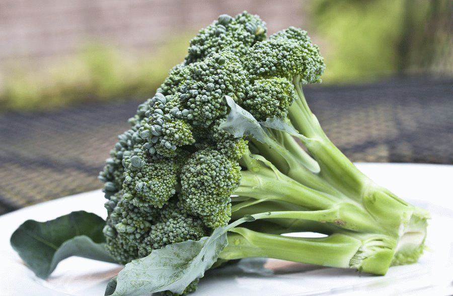 fresh_broccoli_by_muffet1-d57dcbl