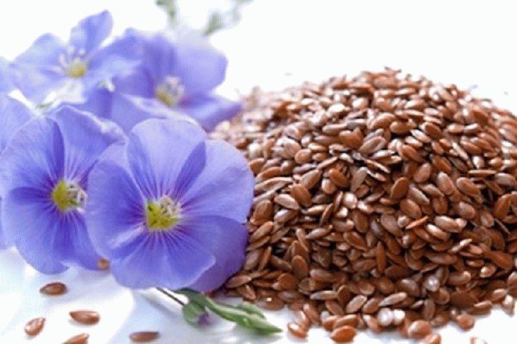 Польза семян льна для здоровья