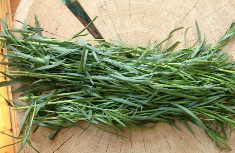 Трава тархун полезные свойства