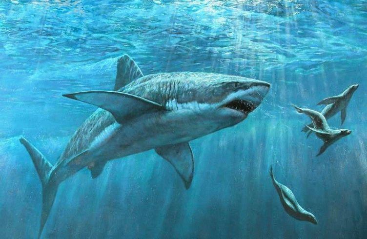 Акулий сквален и биодобавки для похудения из Японии